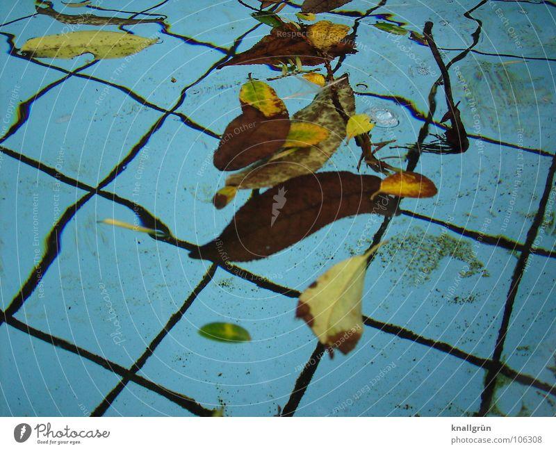 Der Sommer ist zu Ende Blatt braun Herbst Herbstbeginn Vergänglichkeit Wasser blau Becken Fliesen u. Kacheln gefallene Blätter