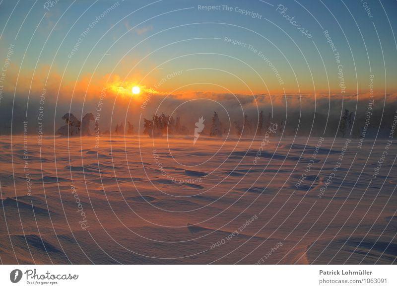 Sonnenaufgang auf dem Feldberg Himmel Natur Ferien & Urlaub & Reisen schön Baum Einsamkeit Landschaft ruhig Winter Ferne kalt Umwelt Berge u. Gebirge Schnee
