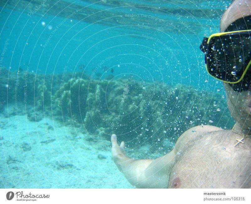 Taucher Mann blau Wasser Ferien & Urlaub & Reisen Meer Freude Erholung Spielen Freiheit Schwimmen & Baden Freizeit & Hobby tauchen tief türkis beige Taucher