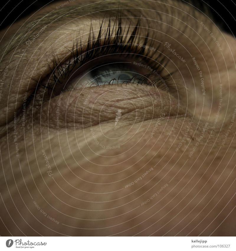 world in my eyes Mensch Mann blau Auge Leben Haut Lebewesen Falte Sommersprossen Wimpern Augenbraue Regenbogenhaut Pore