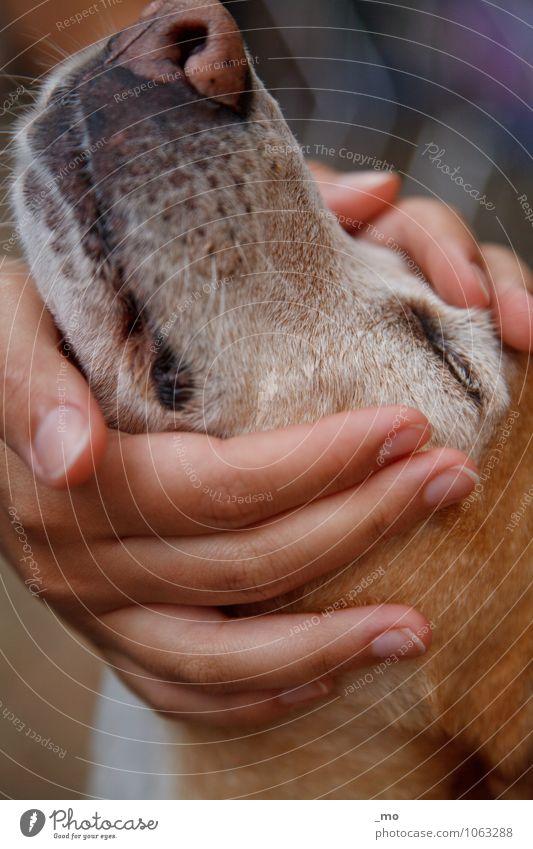 Schnecke Hund Hand Freude Tier Gefühle feminin Glück Zusammensein Freundschaft Zufriedenheit Lebensfreude Warmherzigkeit weich Finger Zusammenhalt Vertrauen