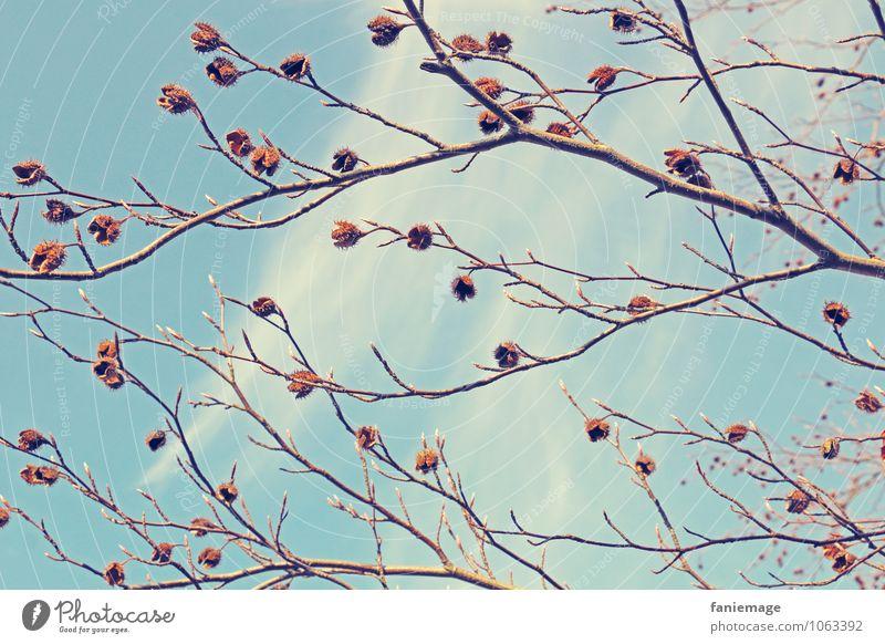 Bucheckern Natur Frühling Schönes Wetter Baum Sträucher Park schön Zweig Zweige u. Äste Ast verzweigt hell-blau Blauer Himmel Wolken Wärme Warmes Licht