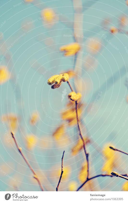 wärmer Natur Sonne Frühling Schönes Wetter Baum Sträucher Park Wiese Feld Optimismus Wärme gelb Farbe hell-blau Himmel (Jenseits) Blauer Himmel Zweig Ast