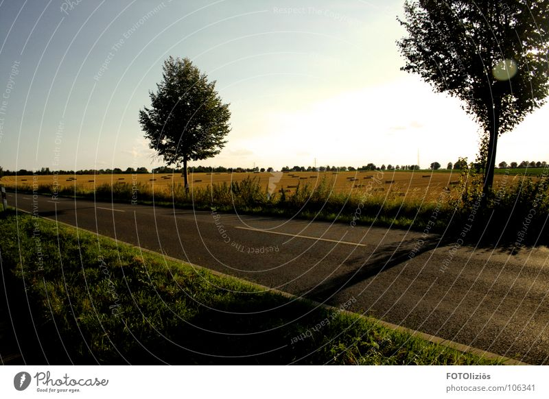 Dorfidylle Himmel Natur schön Sommer Baum ruhig Gefühle Wohnung Feld Idylle Getreide Ernte Ackerbau Landstraße Fahrbahnmarkierung schweigen