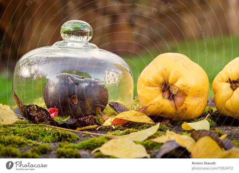 Stillleben - Herbst - Obst Lebensmittel Frucht Apfel Ernährung Lifestyle Gesundheit Gesunde Ernährung Duft Garten Natur Schönes Wetter Moos Blatt Wiese liegen