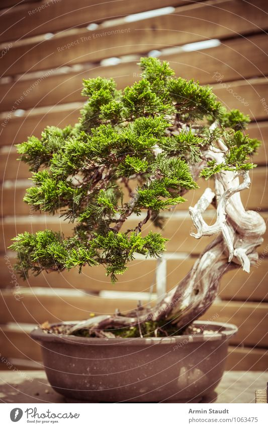 bonsai natur alt pflanze ein lizenzfreies stock foto von photocase. Black Bedroom Furniture Sets. Home Design Ideas