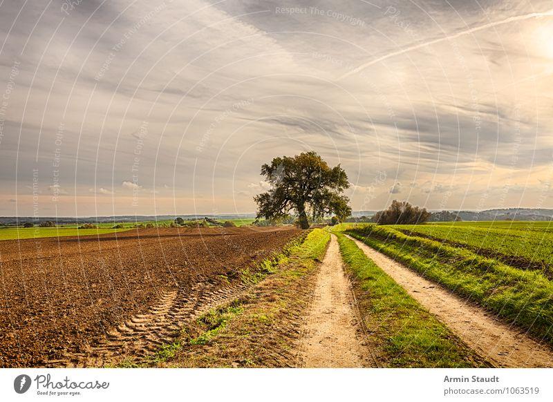 Feldweg und Landschaft Himmel Natur Pflanze schön Sommer Baum Ferne Umwelt gelb Herbst natürlich Wege & Pfade Hintergrundbild Stimmung Horizont