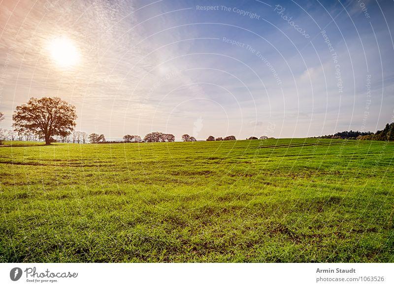 Landschaft - Baum - Sonne Natur Himmel Sonnenaufgang Sonnenuntergang Sonnenlicht Frühling Sommer Herbst Schönes Wetter Park Wiese Feld leuchten Wachstum Ferne