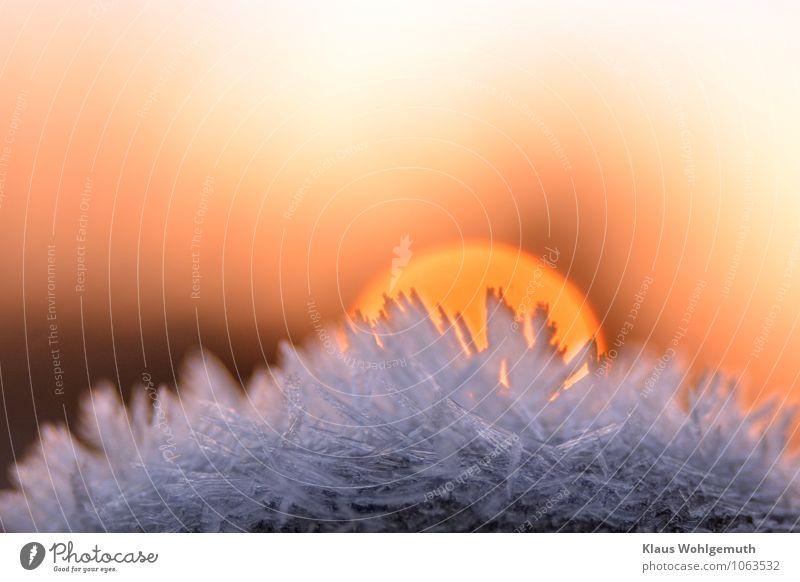 Wintersonne Natur blau weiß Sonne Winter Umwelt Schnee braun rosa gold frieren Kristalle