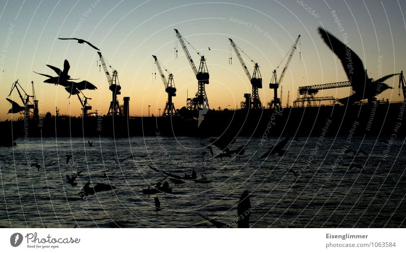 HH Hafen Fischmarkt... Hamburger Hafen Deutschland Europa Menschenleer Schifffahrt Lastkran Vogel Möwe Lachmöwe Tiergruppe maritim Kommunizieren Natur Farbfoto