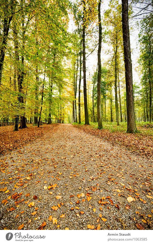 Herbstwaldweg Natur Ferien & Urlaub & Reisen grün Baum Erholung Landschaft Ferne Wald Umwelt natürlich Wege & Pfade braun Stimmung träumen Erde