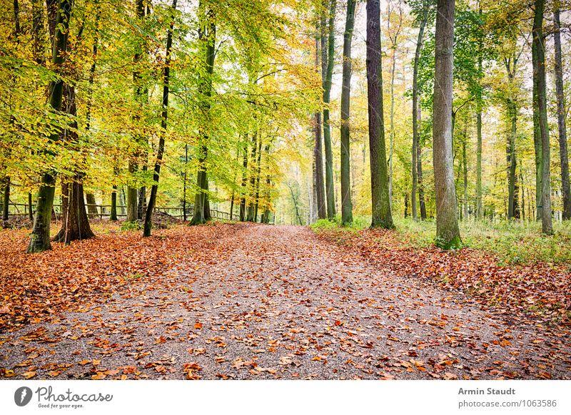 Herbstwaldweg Natur Ferien & Urlaub & Reisen grün Baum Erholung Landschaft Ferne Wald Umwelt Gefühle natürlich Wege & Pfade braun träumen Erde