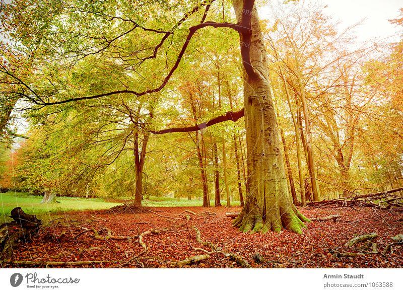 Herbstwald Natur alt schön grün Baum Landschaft dunkel Wald gelb natürlich Stimmung Zufriedenheit Wachstum Kraft ästhetisch