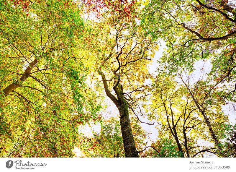 Herbstbild Natur Pflanze grün Baum Landschaft Wald gelb natürlich Hintergrundbild außergewöhnlich Stimmung Wachstum leuchten Idylle Design