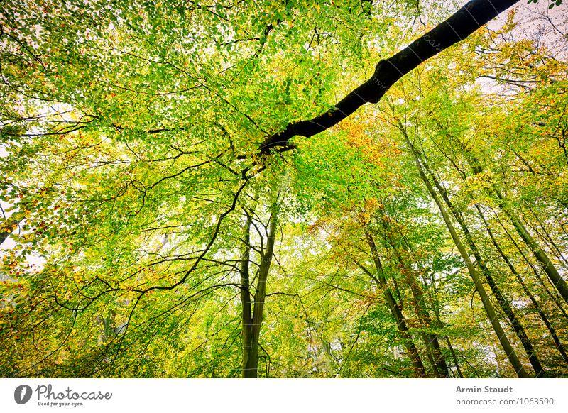 Herbstbild Natur schön grün Baum Landschaft Ferne Wald gelb natürlich Hintergrundbild außergewöhnlich Stimmung Wachstum Design frisch