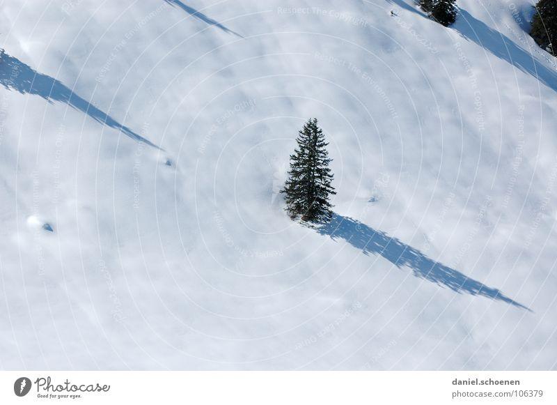 o tannenbaum ... weiß Baum Ferien & Urlaub & Reisen Winter Landschaft Schnee grau Freizeit & Hobby wandern Ausflug fahren geheimnisvoll Tanne Skifahrer unklar