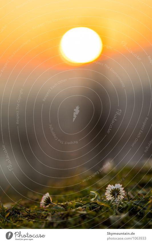 Sonnenuntergang Lifestyle Freude Glück Freizeit & Hobby Umwelt Natur Landschaft Pflanze Sonnenaufgang Frühling Sommer Herbst Winter Klima Klimawandel Wetter