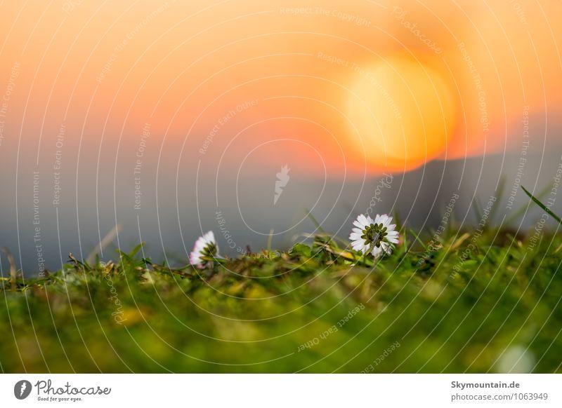 Spring is coming - Der Frühling kommt Natur Pflanze schön Erholung Blume Blatt Landschaft ruhig Freude Leben Gefühle Gras Blüte Glück Stimmung