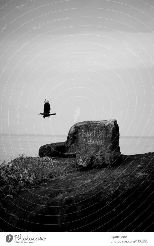 leaving... Rabenvögel Krähe Vogel Tier gehen Horizont beschriften dunkel Trauer Meer trüb horizontal Küste Verzweiflung Schwarzweißfoto Felsen Stein Flügel