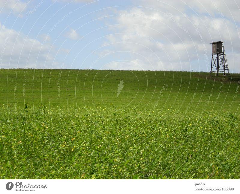 Turm h8 Farbfoto Außenaufnahme Textfreiraum unten ruhig Jagd Ferne Leiter Landschaft Himmel Horizont Sommer Wiese Feld Hochsitz Wildtier Neugier blau grün