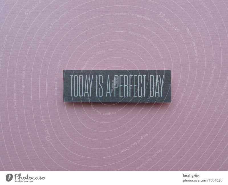 TODAY IS A PERFECT DAY weiß Freude Gefühle Glück grau rosa Zufriedenheit Schilder & Markierungen Schriftzeichen Lebensfreude Kommunizieren eckig Erwartung