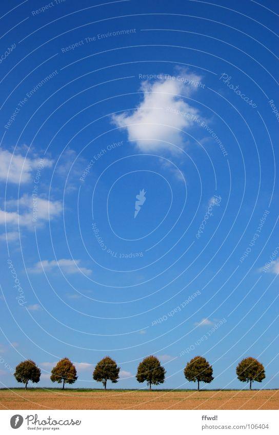 six in a row Natur Himmel Baum blau Sommer Wolken Linie Feld Ordnung einfach Landwirtschaft Reihe 6 Glätte Symmetrie gerade