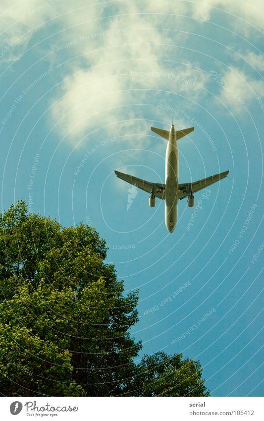 Flugzeuglandung Wolken Baum Baumkrone grün Karosserie Himmel Luftverkehr Industrie blau Unterseite