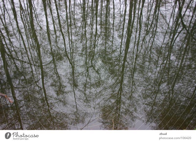 Spiegelwald Wasser Winter Wald trist Spiegel Monochrom