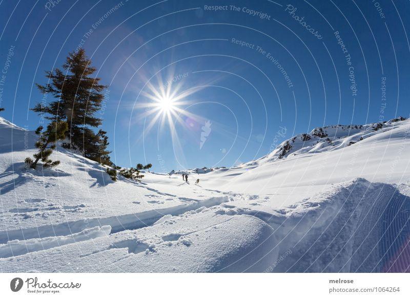 What a beautiful day Himmel Natur Ferien & Urlaub & Reisen weiß Sonne Baum Erholung Landschaft ruhig Winter kalt Berge u. Gebirge Bewegung Schnee braun Felsen
