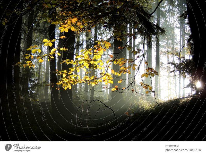 herbstleuchten Natur Sonne Baum Erholung Landschaft ruhig Wald Umwelt Herbst Gras Sport gehen Zufriedenheit träumen Erde Sträucher