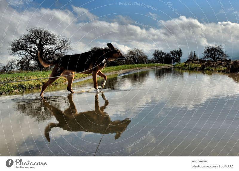 cloudwater Erholung ruhig Ausflug Natur Landschaft Luft Wasser Himmel Wolken Schönes Wetter Baum Gras Wiese Straßenverkehr Haustier Hund 1 Tier Wege & Pfade