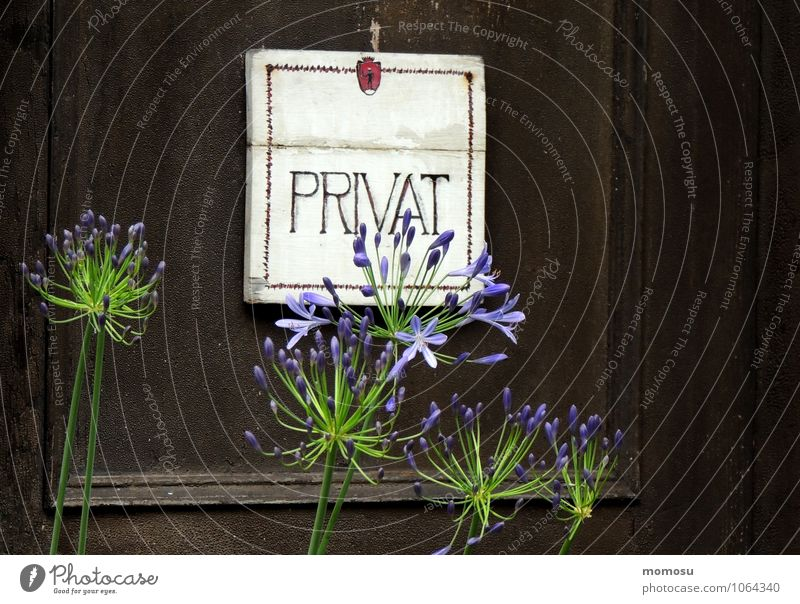 privat blau Pflanze Erholung Blume ruhig Blüte braun Wohnung Raum Zufriedenheit Dekoration & Verzierung Tür Schilder & Markierungen Schriftzeichen Hinweisschild