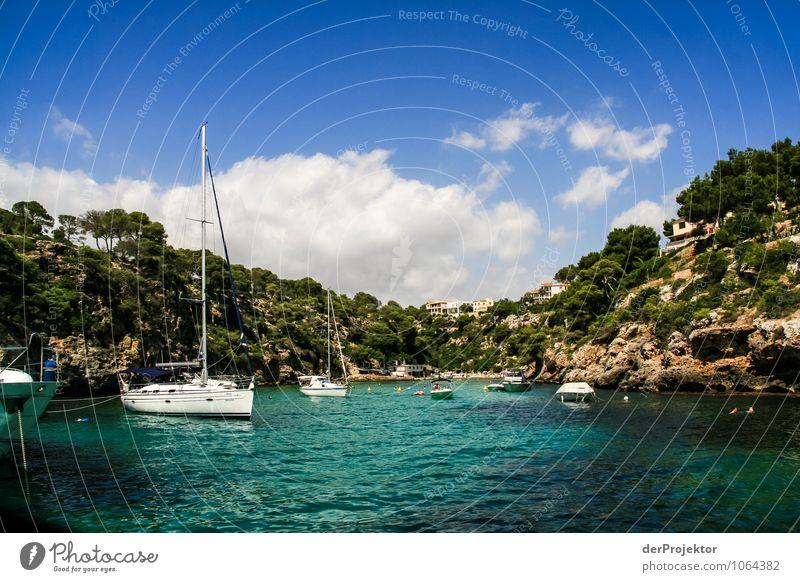 Mallorca von seiner schönen Seite 53 – mal kurz Ankern Natur Ferien & Urlaub & Reisen Pflanze Sommer Baum Meer Landschaft Tier Strand Wald Umwelt