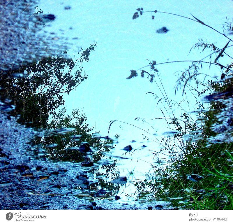 Blaue Stunde Natur Wasser Baum grün blau Pflanze Straße Blüte Gras Wege & Pfade Regen dreckig Erde Rasen Sträucher Asphalt