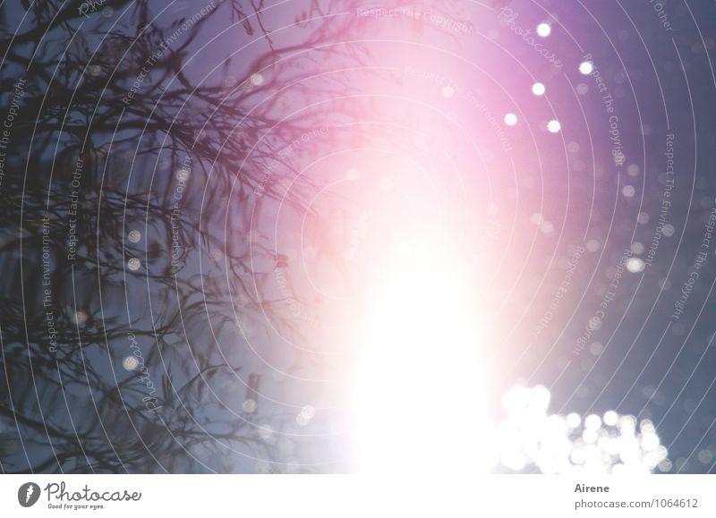 Supernova Urelemente Wasser Himmel Sonne Sonnenlicht Zweige u. Äste Teich See glänzend außergewöhnlich bedrohlich hell blau rosa weiß Entsetzen bizarr
