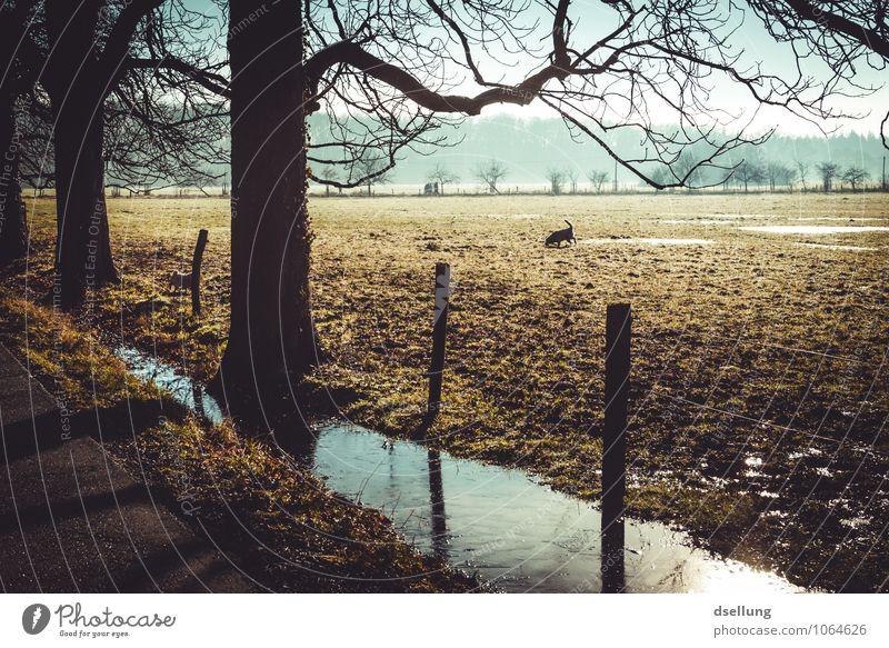 eines schönen wintermorgens ZWEI. Hund blau grün Baum Freude Winter Wald kalt Umwelt Wiese grau Gesundheit braun Eis Feld Zufriedenheit