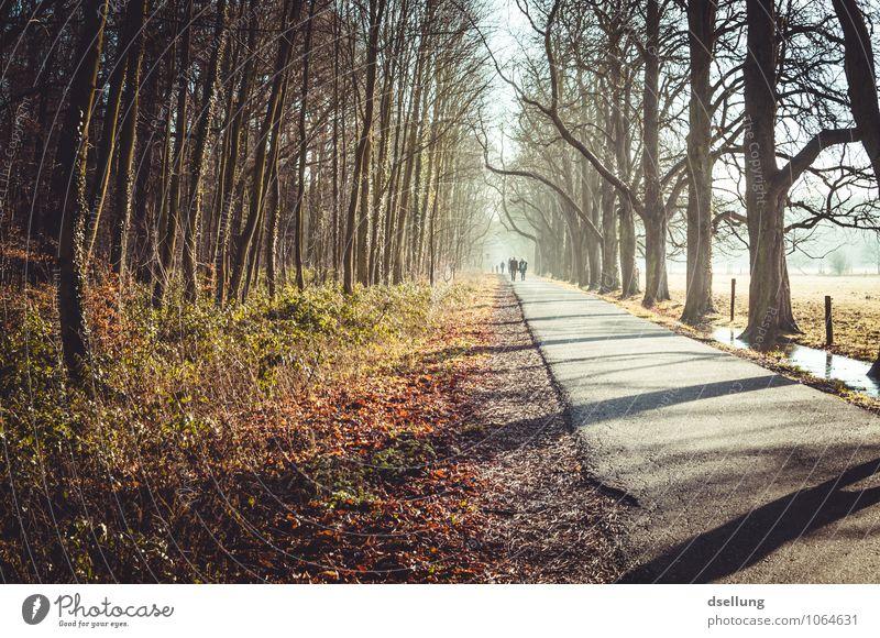 eines schönen wintermorgens. Spaziergang Spazierweg wandern Umwelt Winter Schönes Wetter Eis Frost Baum Wiese Feld Wald Allee Erholung Fitness frei