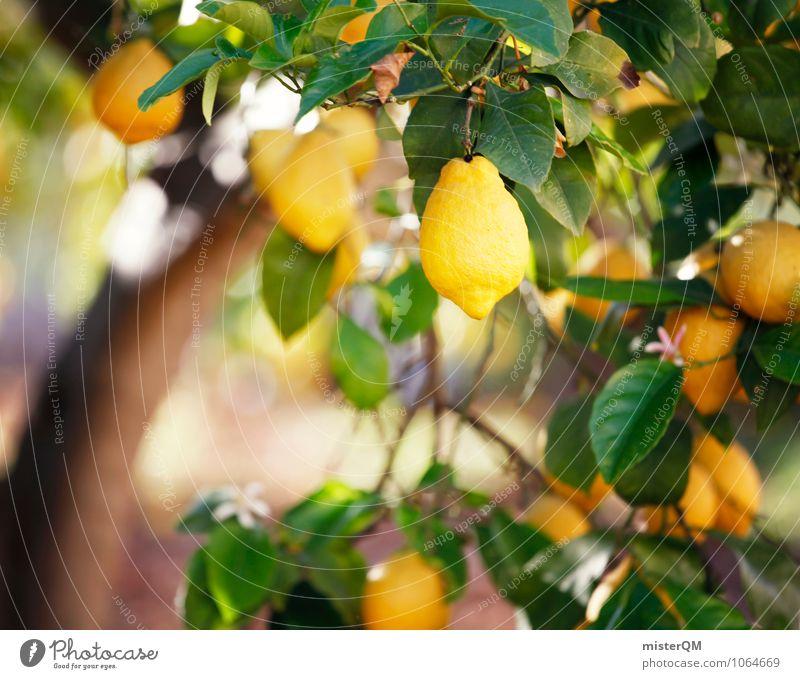 Yellow. Kunst ästhetisch Zufriedenheit Duft Zitrone Zitronensaft zitronengelb Zitronenschale Mallorca Spanien reif lecker sauer Gesunde Ernährung ökologisch