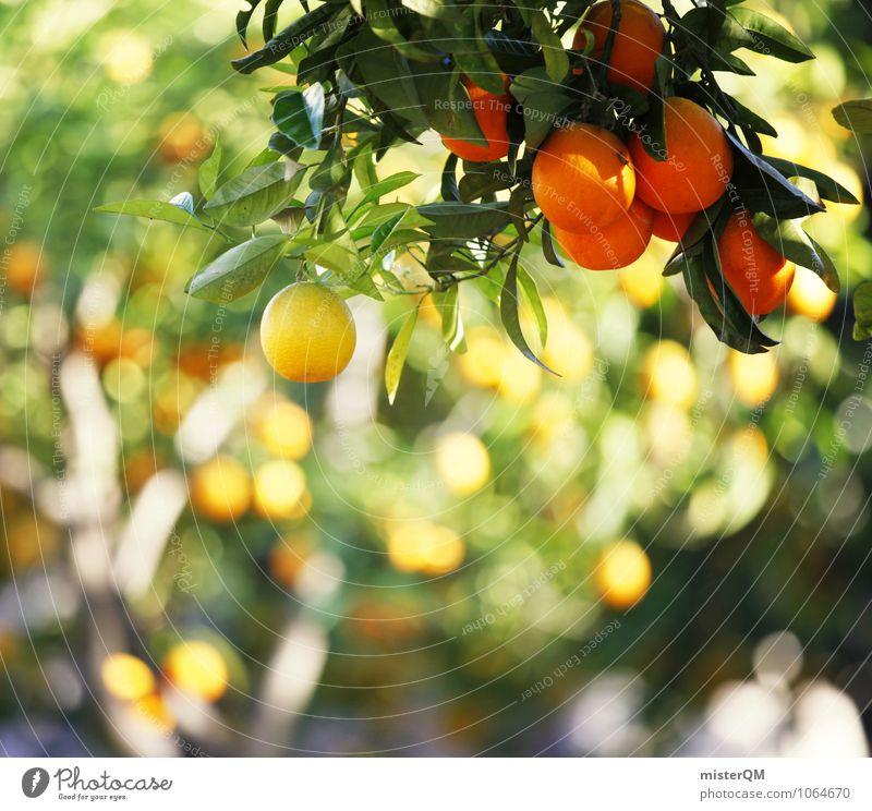 Gelb-Orange. Kunst Umwelt Natur Landschaft ästhetisch Zufriedenheit orange Orangensaft Orangenhaut Orangerie Orangenbaum Orangenschale Farbfoto Gedeckte Farben