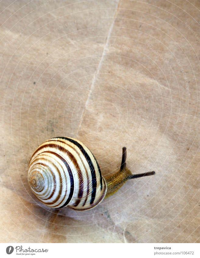 schneckecke Haus Papier Tier Spirale Schneckenhaus gestreift Streifen langsam braun Hintergrundbild Fühler Wohnung unterwegs Vogelperspektive schlemig Ohr