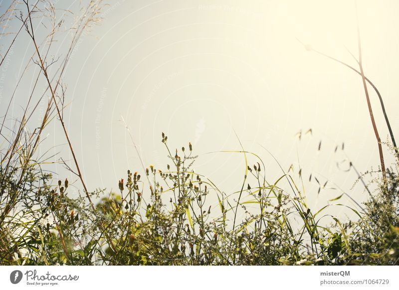 Sonnengras. Natur Pflanze Himmel (Jenseits) grün Landschaft ruhig Umwelt Wiese Gras Garten Park Zufriedenheit Idylle ästhetisch Perspektive Klima
