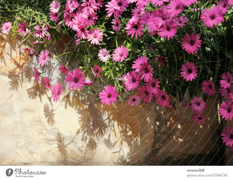 Rosa Mauer. Kunst ästhetisch Blume Mauerpflanze Mauerstein Mauerreste Blüte rosa Farbfoto Gedeckte Farben Außenaufnahme Nahaufnahme abstrakt Menschenleer