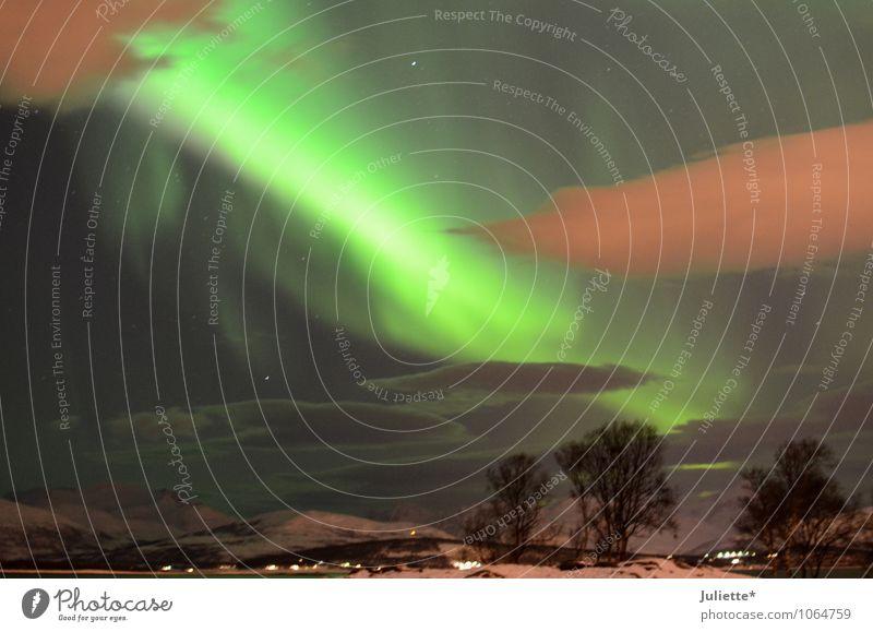 Polarlicht Tromsø_2 Himmel Natur grün weiß Baum Landschaft Wolken Winter Umwelt Berge u. Gebirge Gefühle Schnee Glück Wetter Sträucher fantastisch