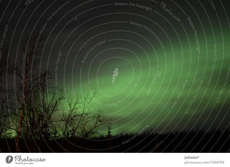 Polarlicht Tromsø Himmel Natur Ferien & Urlaub & Reisen grün Baum Landschaft Wolken Winter dunkel kalt Gefühle Stimmung Sträucher Stern Schönes Wetter Abenteuer