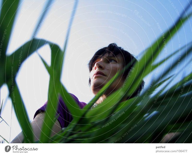 Sehnsucht Fernweh violett Gras grün Gefühle Frau Mensch Blick warten Natur Himmel blau Schatten untern Leben Kopf
