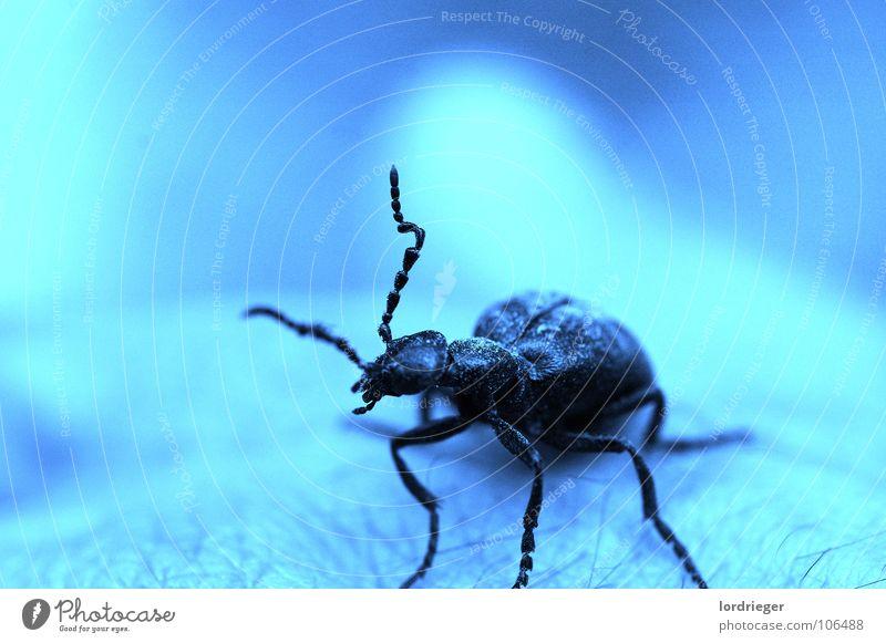 die lebewesen unsres gartens Sägebock Chitin schwarz glänzend Baum Finger Hand Umwelt Tier Insekt krabbeln Fühler Unschärfe Nadelbaum Umweltschutz einzeln Larve