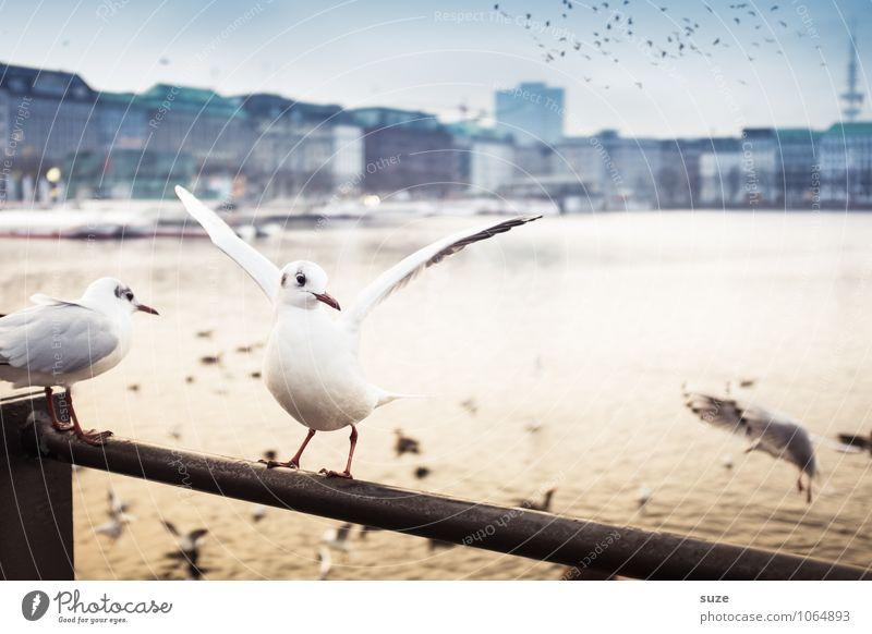 Alsterglück Lifestyle Freude Kultur Luft Wasser Schönes Wetter Seeufer Flussufer Stadt Hafenstadt Stadtzentrum Skyline Tier Vogel Flügel 1 Schwarm Stimmung