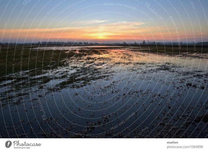 Havelwasser Natur Landschaft Wasser Himmel Wolken Horizont Sonnenaufgang Sonnenuntergang Winter Wetter Schönes Wetter Gras Wiese Küste Flussufer Bach blau grün