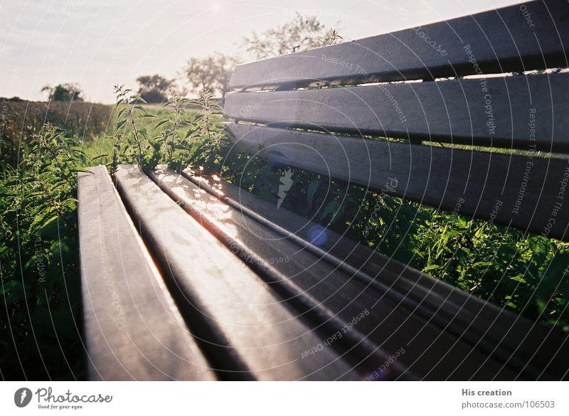 Die Bank Natur grün Sommer Ferne Erholung Wiese Freiheit Wege & Pfade braun