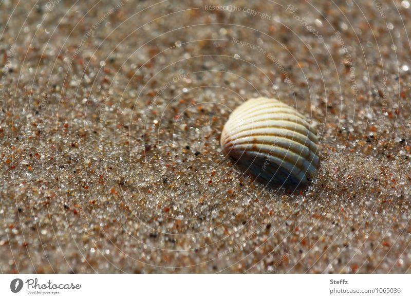 einfach so da harmonisch Wohlgefühl ruhig Sommerurlaub Strand Natur Sandstrand Muschel Muschelschale maritim natürlich braun Urlaubsstimmung Sommergefühl